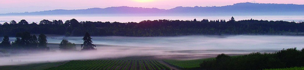 cropped-vineyard-in-fog1.jpg