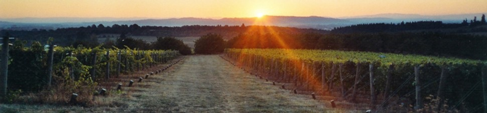 cropped-vineyard-sunrise1.jpg